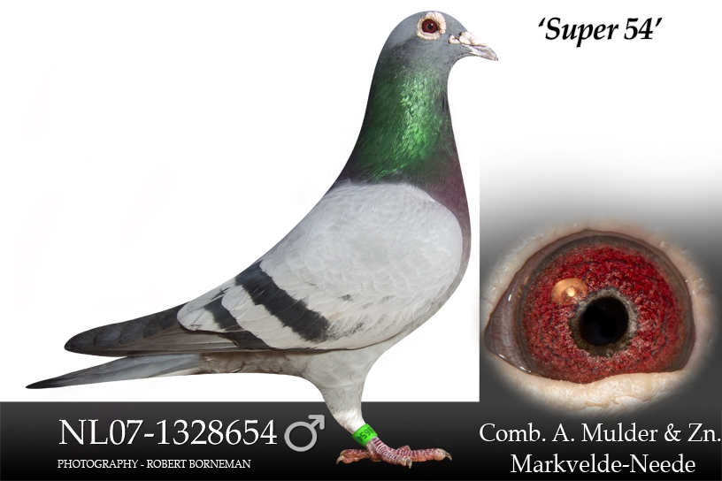 NL07-1328654 Super 54