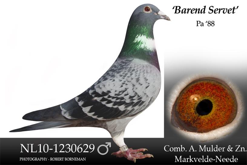 NL10-1230629 Barend Servet