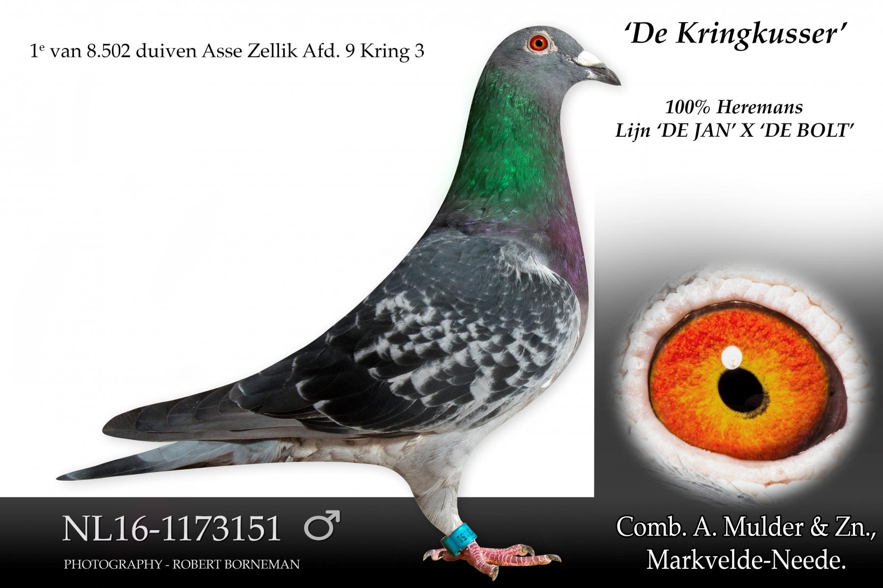 NL16-1173151 KringKusser