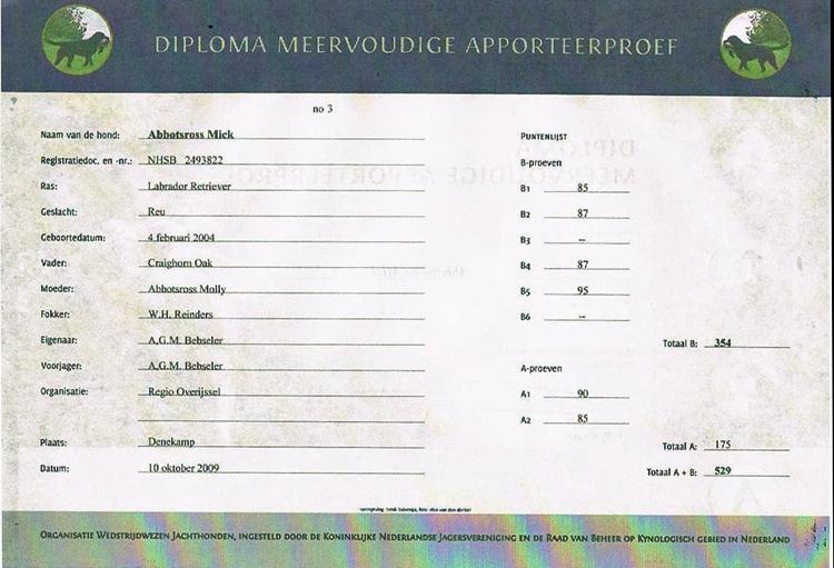diploma-a